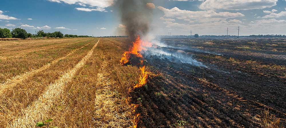 Crop burning causes respiratory disease, Rs 2.35 lakh cr loss